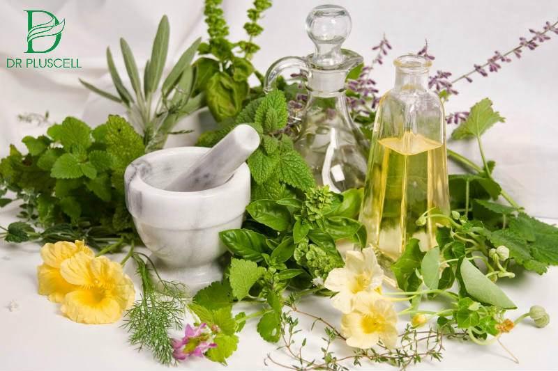 Chiết xuất từ thảo dược thiên nhiên