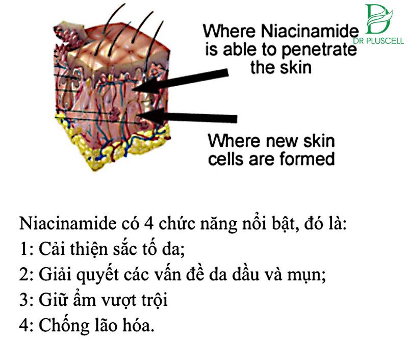 Lợi ích của Niacinamide