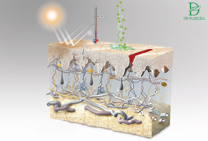 niacinamide chống tia UV