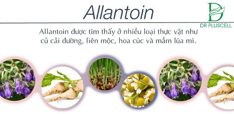 hoạt chất allantoin trong mỹ phẩm