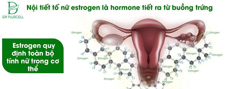 hormone tiết tố nữ