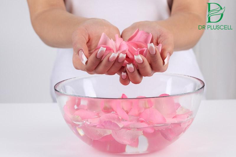 hoa hồng trị thâm môi